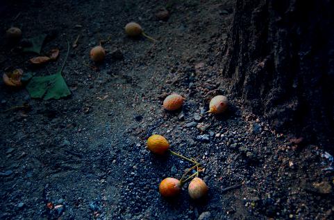 銀杏のの匂い