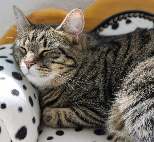 cat-2360856_960_720