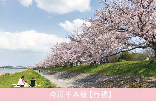 sakurao1